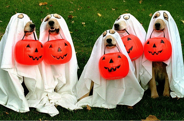how to keep pets safe at halloween