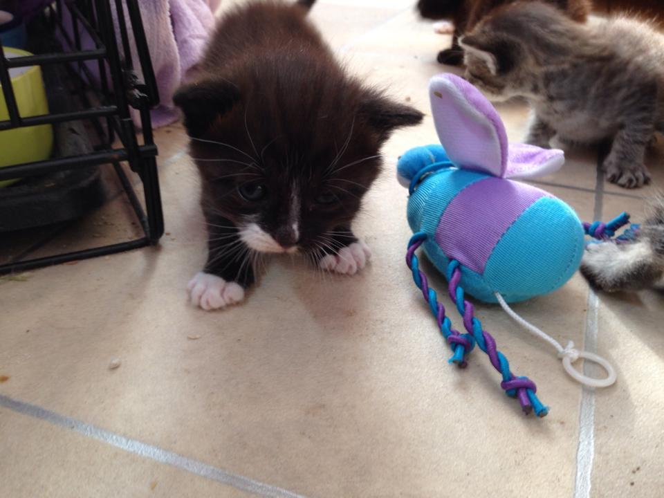 kittens-exploring