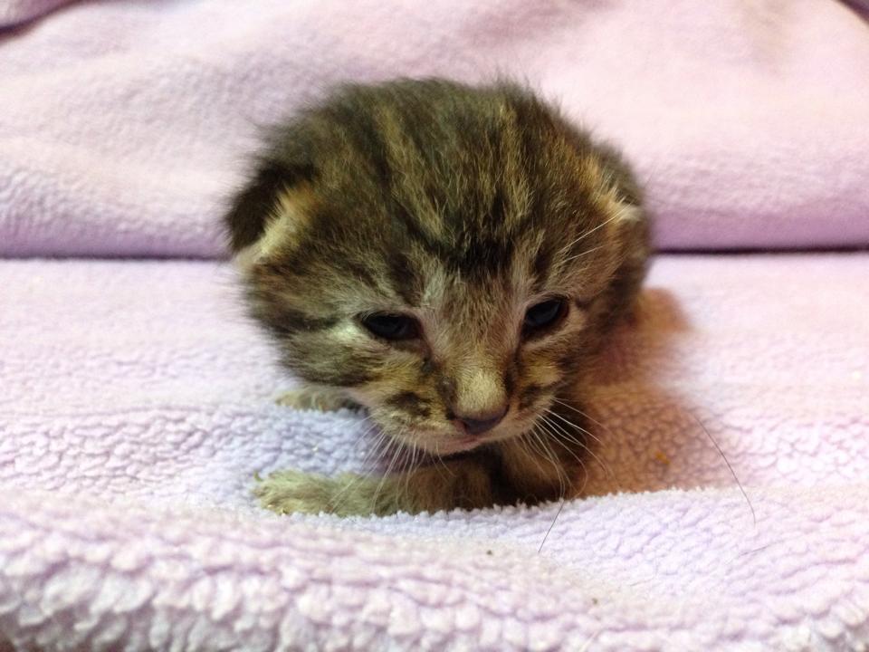 kittens-open-eyes