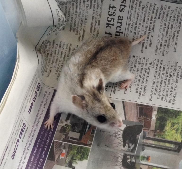 unwanted-hamster