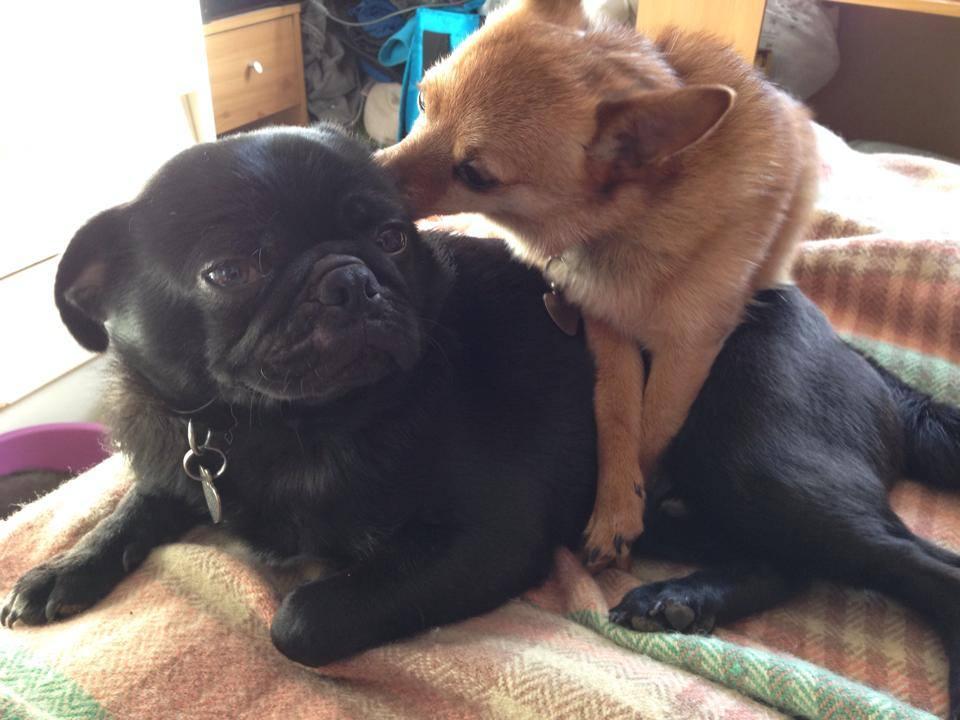 dog-cleans-dog