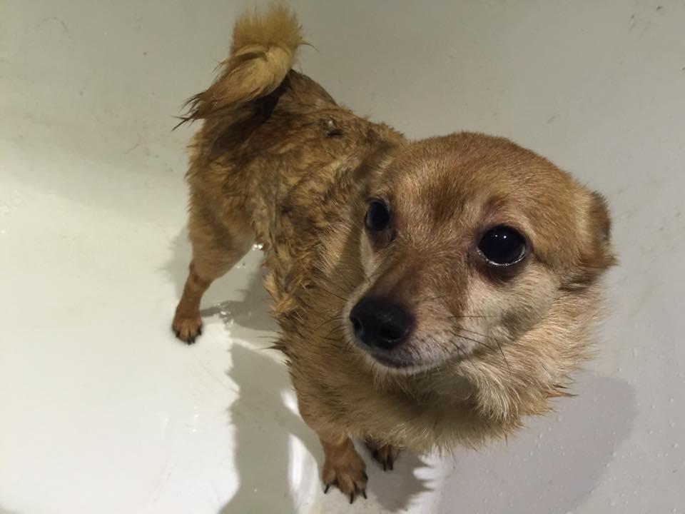 dog-in-bath