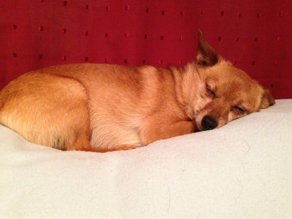 dont-wake-a-sleeping-dog