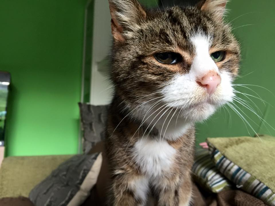elderly-cat
