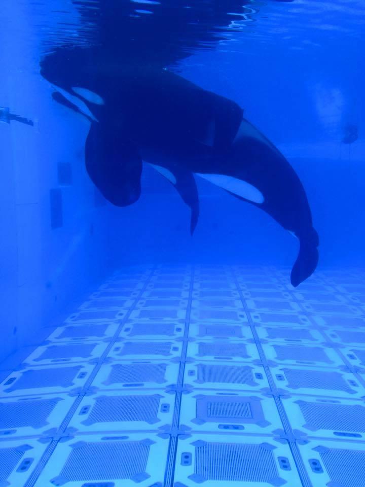 sad-orca