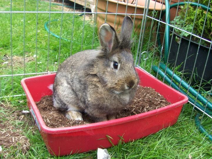 dangers-in-the-garden-for-rabbits