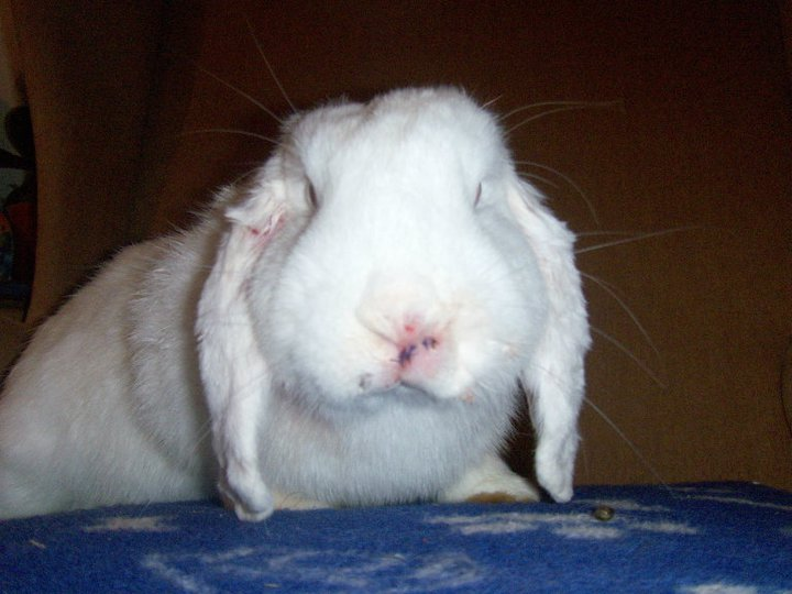 rabbit-fight