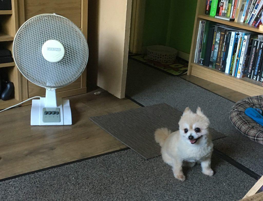 keep-dogs-cool