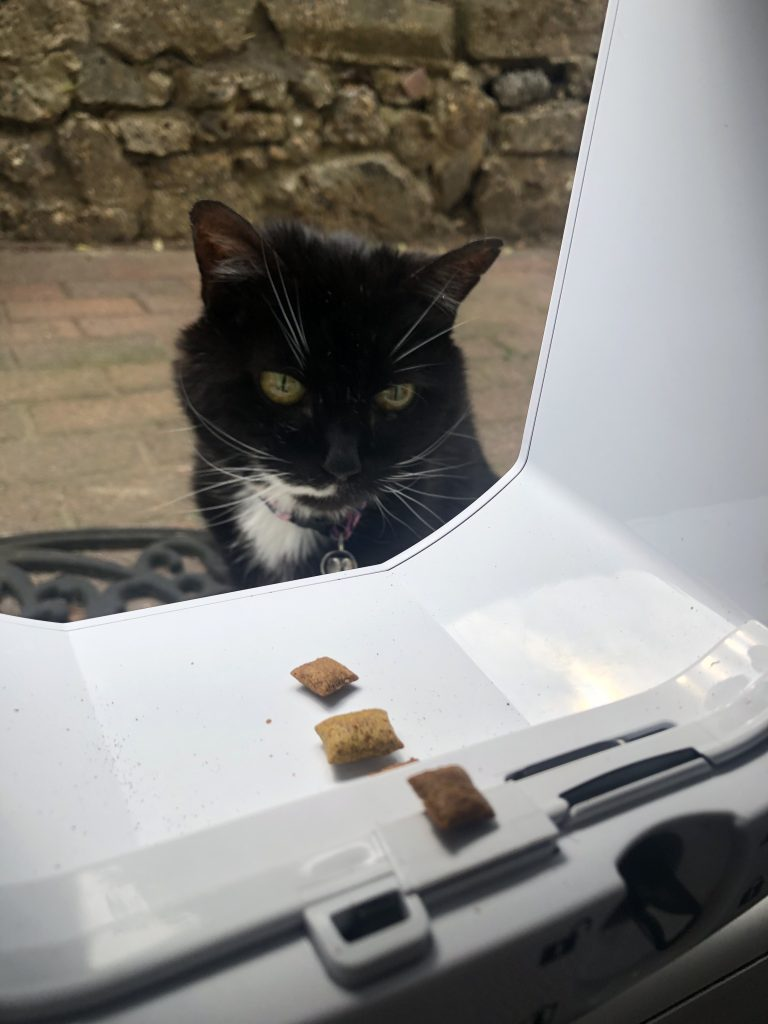 How To Use A Cat-Flap
